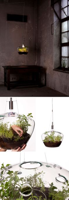 Suspended Greenhouse Lamp / by Czech designer Kristýna Pojerová. via Unruly Things. #lighting #plants