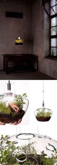 Suspended Greenhouse Lamp / by Czech designer Kristýna Pojerová. via Unruly Things. #lighting #plants