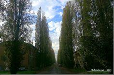 Corso Ercole I d'Este, Ferrara, Italy