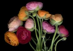 Behind the Lens with Botanical Photographer Laurie Tennent