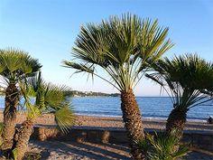 Plage de l'Estérel Site Classé, Beaux Villages, Photos Voyages, Gardens, Garden Landscaping, Beach