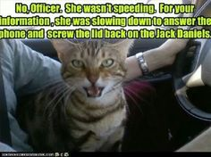 My cat JJ would be the tattletale.  However, I would not do those bad, bad things!