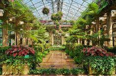 Fuchsia 'Lord Beaconsfield' fake standards, Pelargonium baskets | Flickr - Photo Sharing!