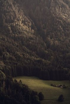 Forests...such an awesome sight ...woods upon woods upon woods...wonderment