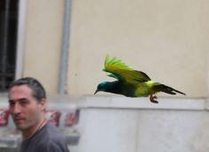 鳩の個性化プリンター | some pigeons are more equal than others
