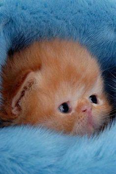 A CUTE BABY KITTEN:) AWWWWWWW!