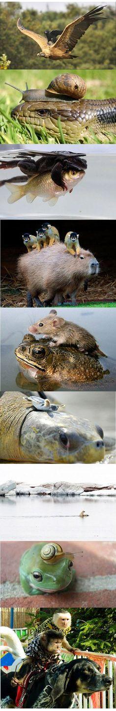 Mitfahrgelegenheiten der Tierwelt - Win Bilder | Webfail - Fail Bilder und Fail Videos