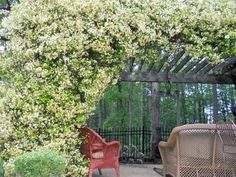 Relaxing Retreat With Jasmine >> http://www.diynetwork.com/outdoors/design-tips-for-beautiful-pergolas/pictures/index.html?soc=pinterest#