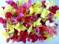 Edible Flowers Snapdragons