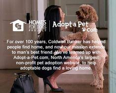 Coldwell Banker® kicks off Homes for Dogs Project » AdoptaPet.com Blog