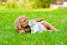 La sterilizzazione degli animali è sicuramente il miglior metodo per evitare la nascita indesiderata di cani e gatti