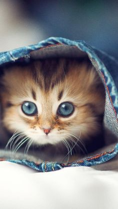 Kittens And Puppies, Cute Cats And Kittens, Baby Cats, Kittens Cutest, Kittens Meowing, Fluffy Kittens, Cutest Pets, Ragdoll Kittens, Bengal Cats