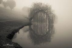 Magical Willow by Jean Li, via 500px