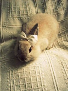 Bunny wearing Satin Bow, Shades of White