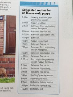 Potty training puppy - Suggested routine for an puppy Credits Training your Superpuppy by Gwen Bailey puppypottytrainingschedule bestdogtrainingideas Puppies Tips, Best Puppies, Dogs And Puppies, Doggies, Puppies Stuff, Baby Dogs, Puppy Training Tips, Training Your Puppy, Puppy Crate Training Schedule