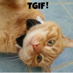 It's Friday #tgif #cats #cat
