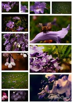 These are pictures I took and quickly edited this morning of a Jacaranda Tree in my mom's front garden. It's Jacaranda season in So. Lavander, Purple Rain, Garden Sculpture, Seasons, Outdoor Decor, Art, Art Background, Seasons Of The Year, Kunst