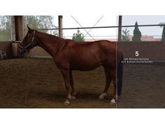 Zone 5 des Pferdes nach Pat Parelli