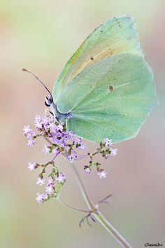 """""""Just living is not enough,"""" said the butterfly, """"one must have sunshine, freedom, and a little flower"""" -Hans Christian Andersen"""