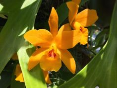 Inspire Bohemia: Blooming Orchids in the Garden