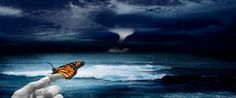 El efecto mariposa  - Ya muchos sabemos lo que es el efecto mariposa, básicamente el efecto mariposa dice que el aleteo de una mariposa podría provocar un Tsunami del otro lado del mundo, una secuencia de eventos que nos llevan a donde estamos o a elegir lo que queremos hacer, que estés en este canal leyendo esto es el resultado de distintos eventos de tu vida, si cuando descubriste esta página hubieses decidido no seguirla, en estos momentos estarías haciendo otras cosas, entonces ¿fue tu…