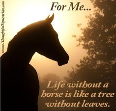 life without a horse is....