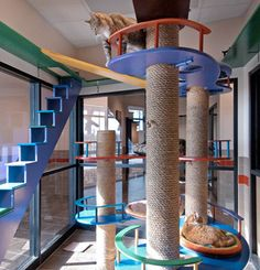 Giant Cat Play Structure in Humane Society Adoption Facility. That is so cool, if I was a cat I wouldn't want to be adopted ;)