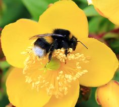 Power Nap, Take A Nap, Flower Power, Wordpress, Bee, Bloom, Nature, Flowers, Naturaleza