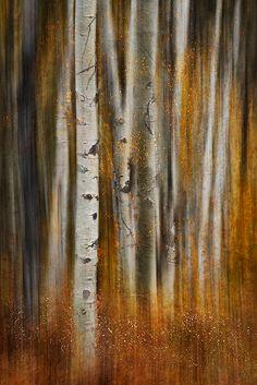 trees en automne