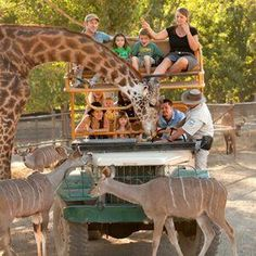 Safari West   Discover all things #SonomaCounty at Sonoma.com