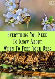Honey bees need our help at different times throughout the year to suppliment their food. Knwoing when to feed your bees and the nectar flow is important.