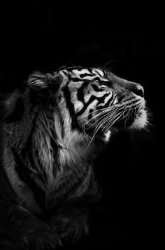 is there a future for me? - Belezza,animales , salud animal y mas Black Animals, Animals And Pets, Cute Animals, Tier Wallpaper, Animal Wallpaper, Beautiful Cats, Animals Beautiful, Beautiful Pictures, Tiger Fotografie