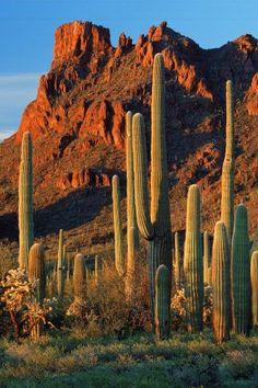 Organ Pipe National Monument . Arizona