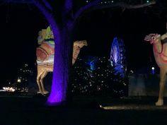 Light Trails, Lights, Concert, Recital, Concerts, Lighting, Lamps, Candles, String Lights