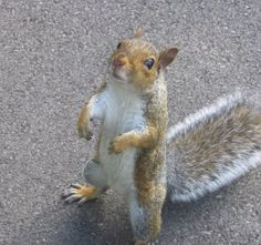 A Day In Your Prayer Life Whatever Your Need Is Today Don T Give Up Your Answer Is On The Way Squirrel Funny Cute Squirrel Squirrel Pictures