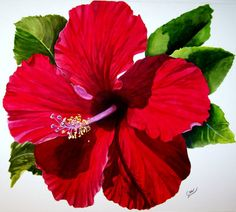 Hibiscus Painting - Saras Pashion by Karen Casciani Tropical Flowers, Hawaiian Flowers, Hibiscus Flowers, Canvas Art, Canvas Prints, Art Prints, Watercolor Flowers, Watercolor Paintings, Watercolour