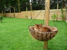 Happy Animals, Animals And Pets, Puppies And Kitties, Kittens, Outdoor Cat Run, Outdoor Cat Enclosure, Cat Window, Fluffy Cat, Cat Furniture