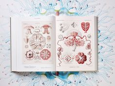 The Art and Science of Ernst Haeckel: A Compendium of Colorfully Rendered 19th-Century Biological Illustrations