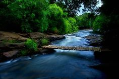 A small stream in Kalady, Kerala