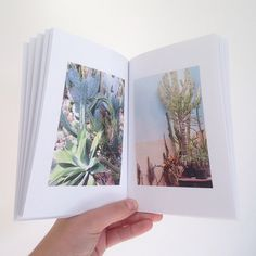 ✓Living With Plants #book #carolinegomez.com #destinationstudiocarolinegomez