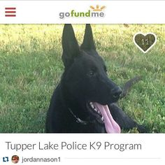 """Yo go help out my boy Jordan and JD #Repost @jordannason1 with @repostapp  http://ift.tt/24p7dtG  This fundraiser is to benefit the Tupper Lake Police Department's new K-9 Program. This program was started in cooperation with the Tupper Lake Village Board and through the generous time and donation of our new K9 """"JD"""" from Bridgette & Wayne LaPierre.  Our program has cost nothing to this point to the taxpayers of our community. Along with the startup comes new equipment necessary for not only…"""