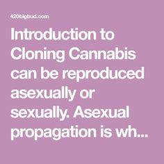 advantages of cloning plants
