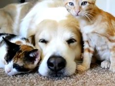 -Help Animals- and -Pet Shelters- with a free click!