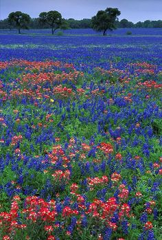 Texas, USA. I'm a sucker for fields of flowers! wherever I settle I want to be surrounded by this.