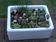 Butlers sink planted with Alpines