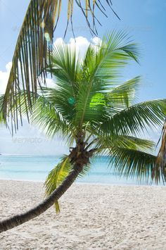 Fantastic Tropical Beach On The Peninsula Of Samana In The Dominican Republic.