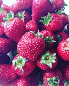 Strawberry season opened