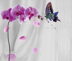 orchids with butterfly Nature Pictures, Colorful Pictures, Beautiful Pictures, Beautiful Butterflies, Beautiful Flowers, Butterfly Kisses, Butterfly Flowers, World Of Color, Nature Wallpaper