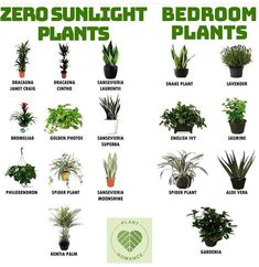 GROW SOME! Plants to grow indoors for the colder months! Add some Yule style! GROW SOME! Plants to grow indoors for the colder months! GROW SOME! Plants to grow indoors for the colder months! Add some