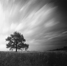 "500px / Photo ""tree"" by Anton Shvain"